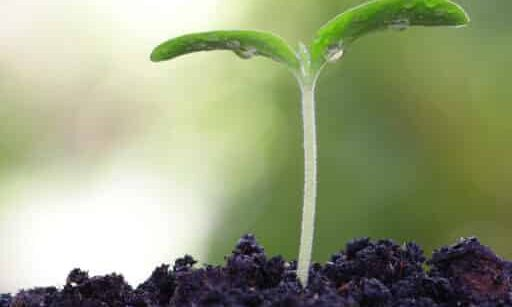 Biofertilizers and Soil Health